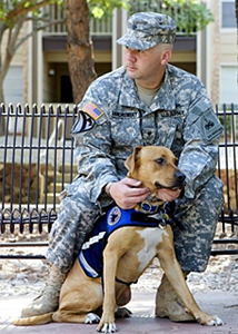 How Many Service Dogs Have Ptsd
